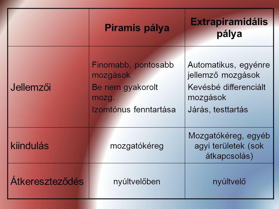 Extrapiramidális pálya