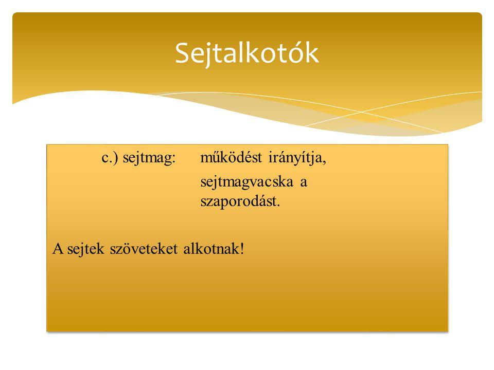 Sejtalkotók c.) sejtmag: működést irányítja, sejtmagvacska a szaporodást.