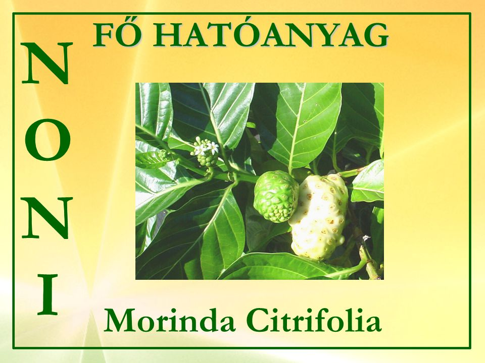 FŐ HATÓANYAG NONI Morinda Citrifolia