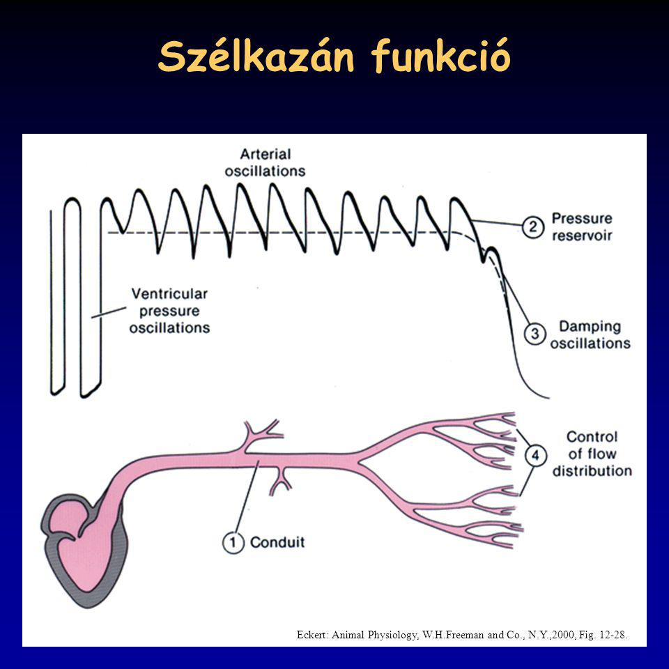 Szélkazán funkció Eckert: Animal Physiology, W.H.Freeman and Co., N.Y.,2000, Fig. 12-28.