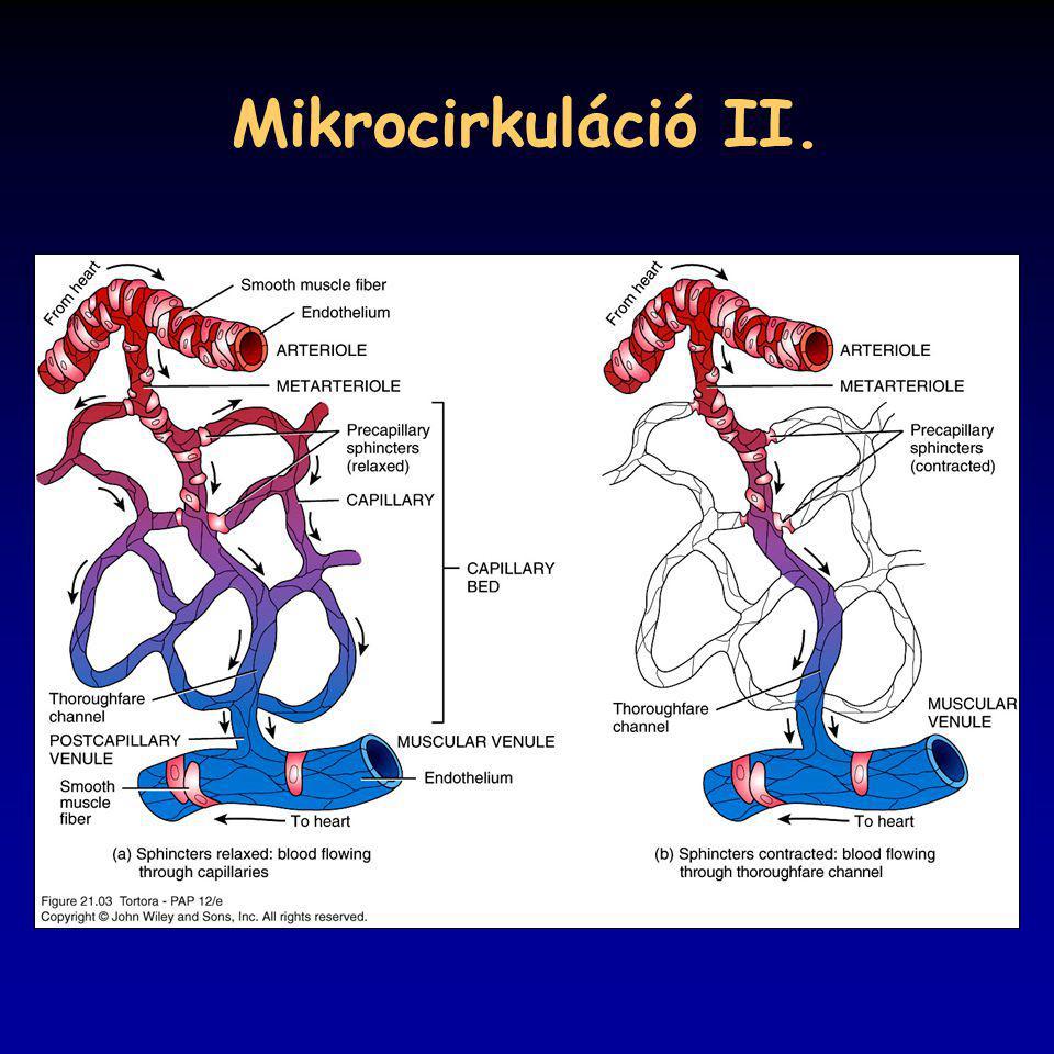 Mikrocirkuláció II. 21_03