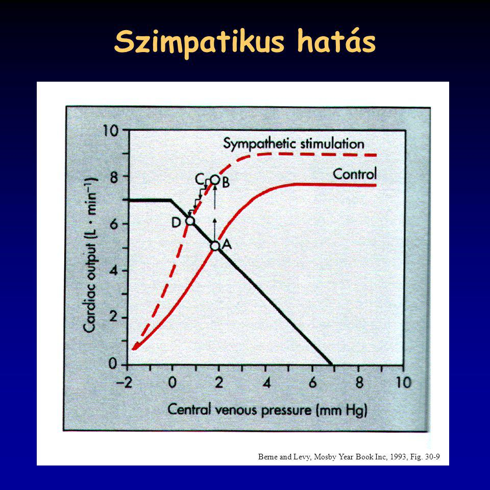 Szimpatikus hatás Berne and Levy, Mosby Year Book Inc, 1993, Fig. 30-9