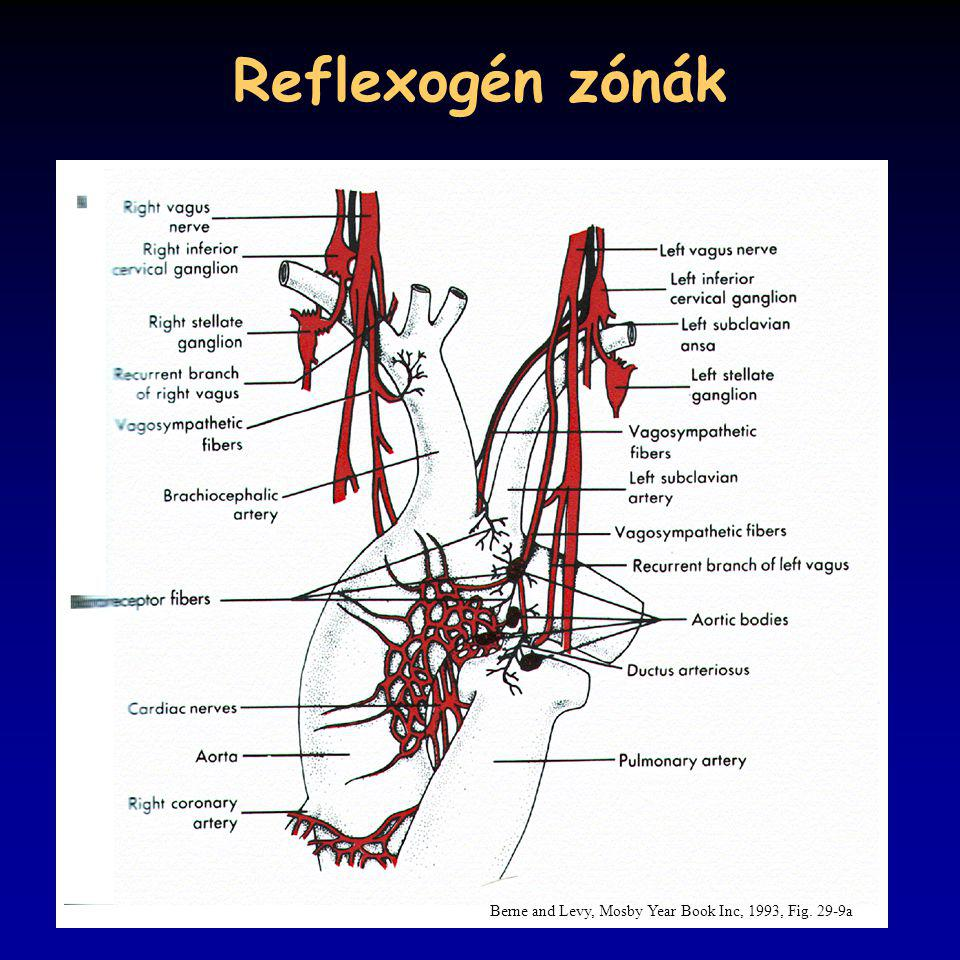 Reflexogén zónák Berne and Levy, Mosby Year Book Inc, 1993, Fig. 29-9a
