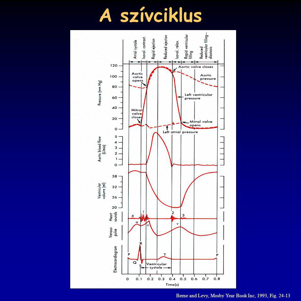 A szívciklus Berne and Levy, Mosby Year Book Inc, 1993, Fig. 24-13
