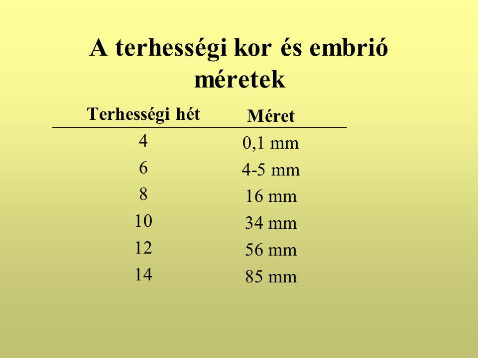 A terhességi kor és embrió méretek