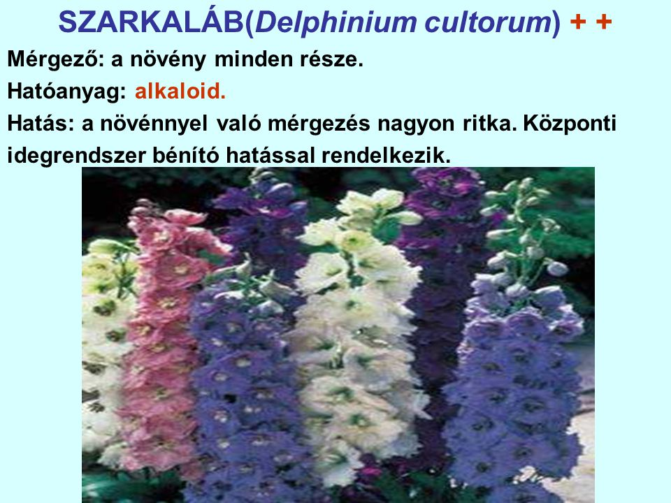 SZARKALÁB(Delphinium cultorum) + +