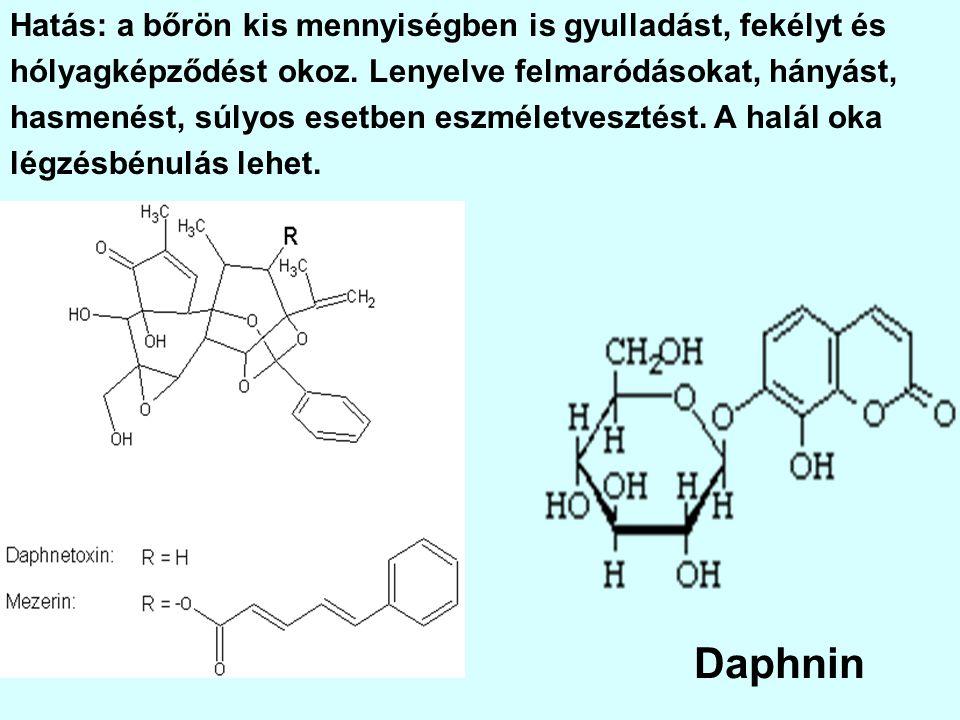 Daphnin Hatás: a bőrön kis mennyiségben is gyulladást, fekélyt és
