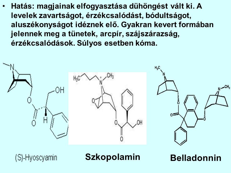 Szkopolamin Belladonnin