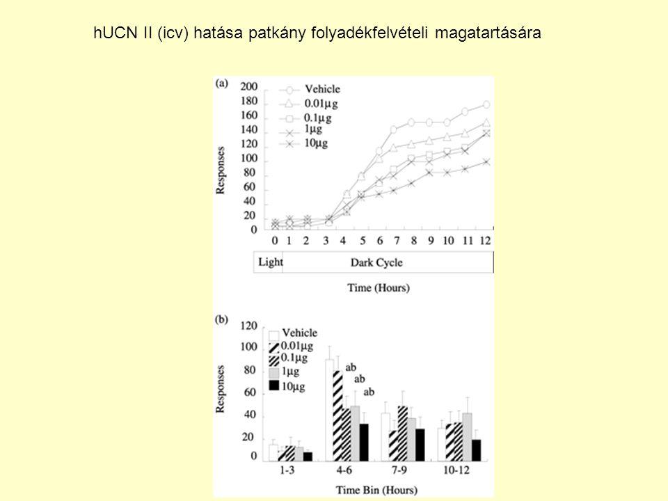 hUCN II (icv) hatása patkány folyadékfelvételi magatartására