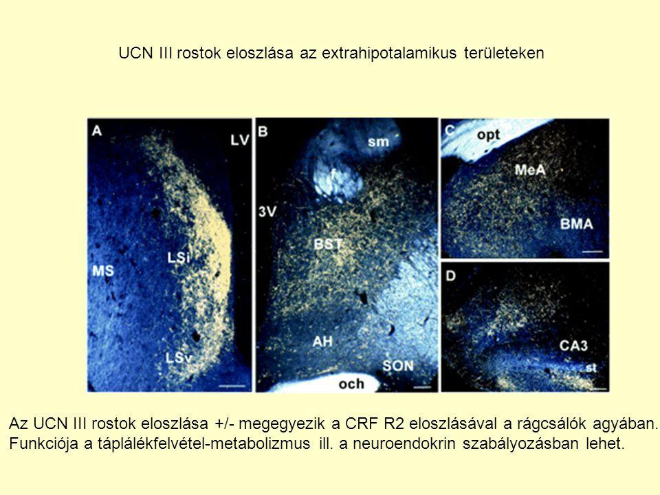 UCN III rostok eloszlása az extrahipotalamikus területeken