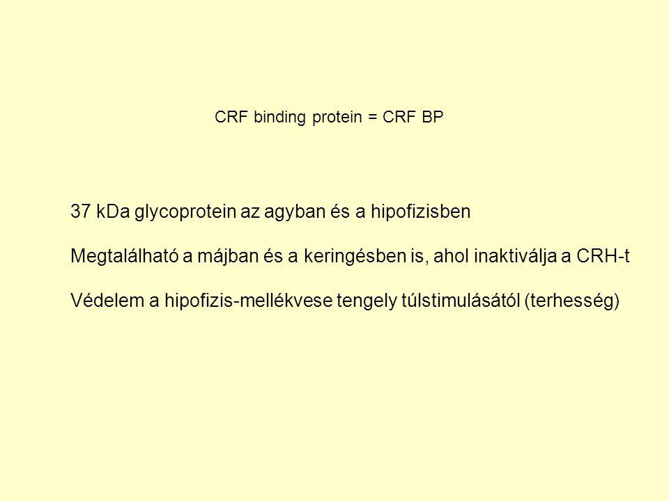 37 kDa glycoprotein az agyban és a hipofizisben