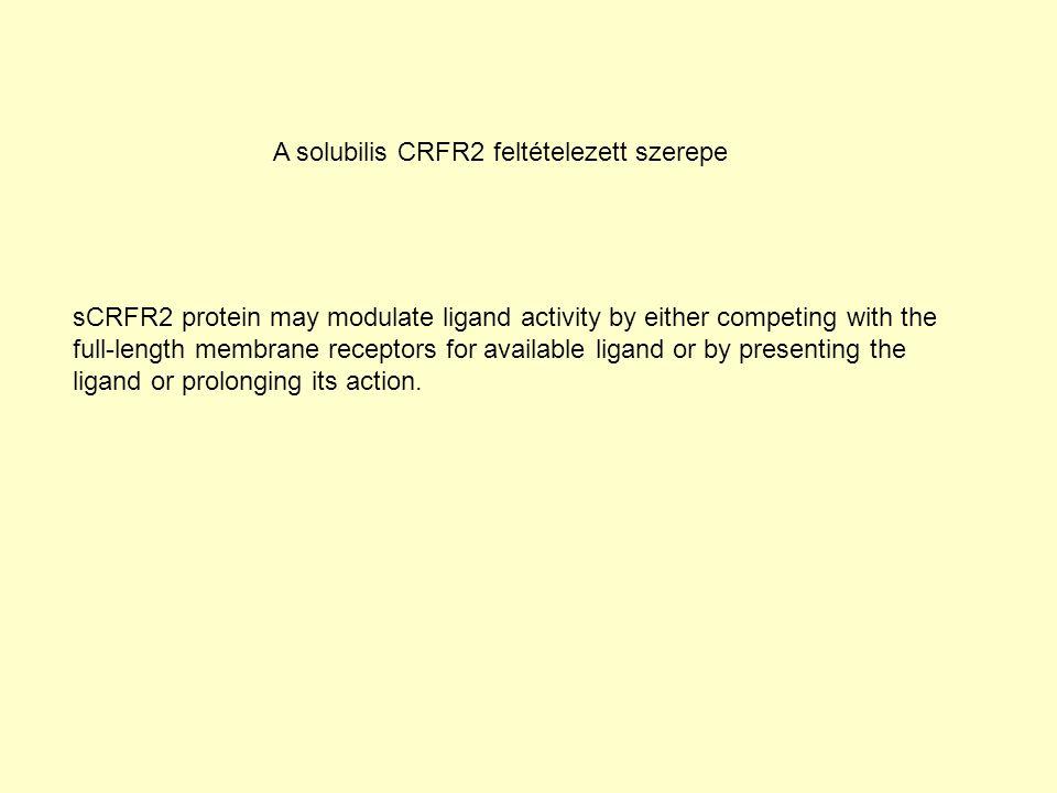 A solubilis CRFR2 feltételezett szerepe