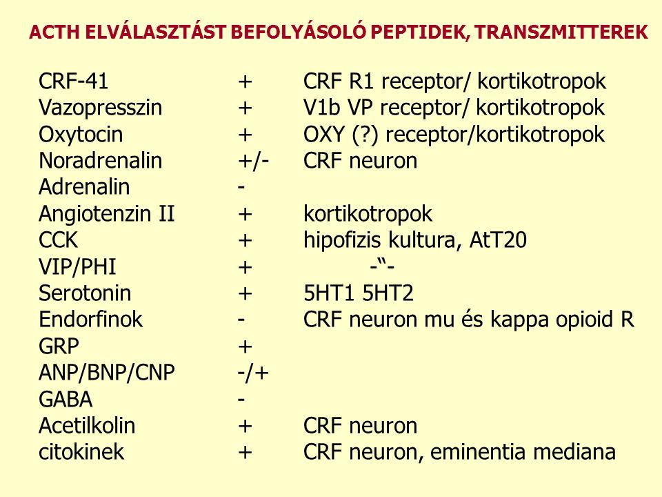 CRF-41 + CRF R1 receptor/ kortikotropok