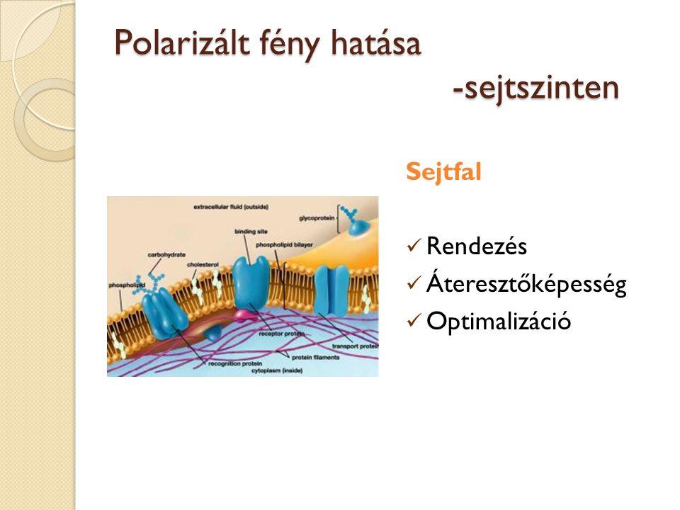 Polarizált fény hatása -sejtszinten