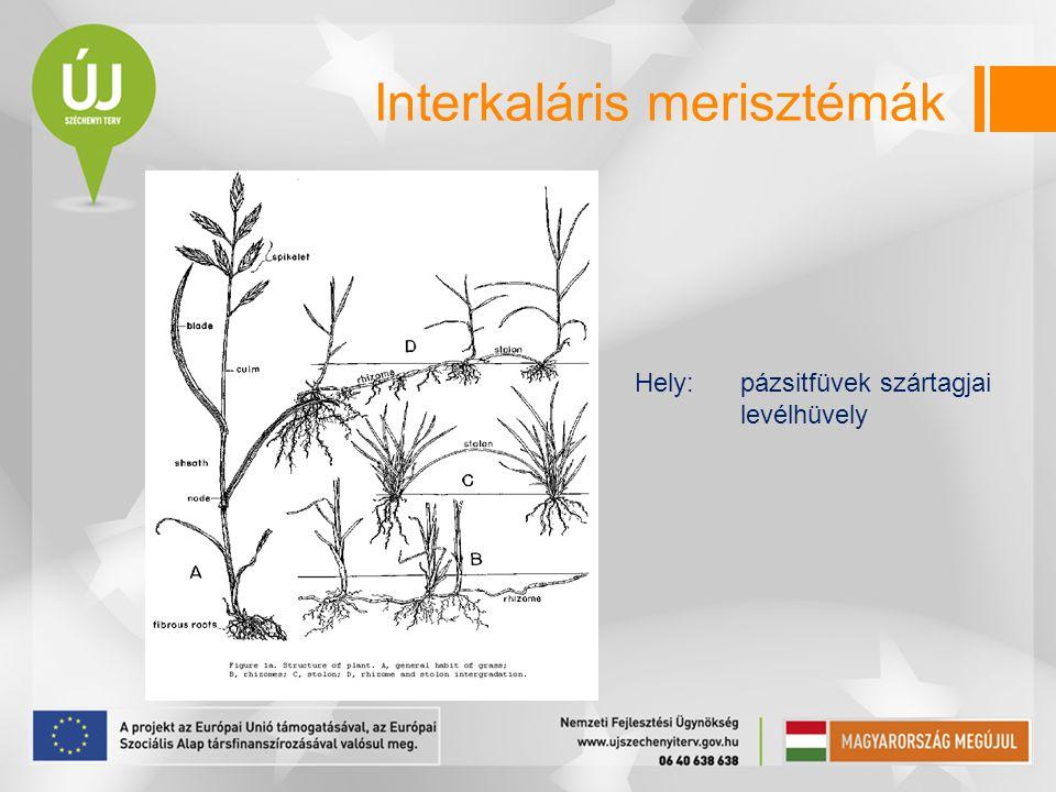 Interkaláris merisztémák