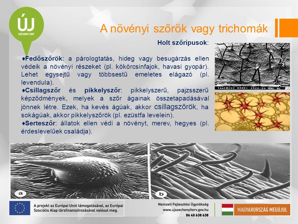A növényi szőrök vagy trichomák