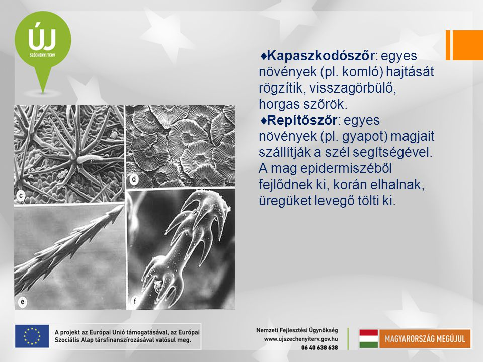 Kapaszkodószőr: egyes növények (pl