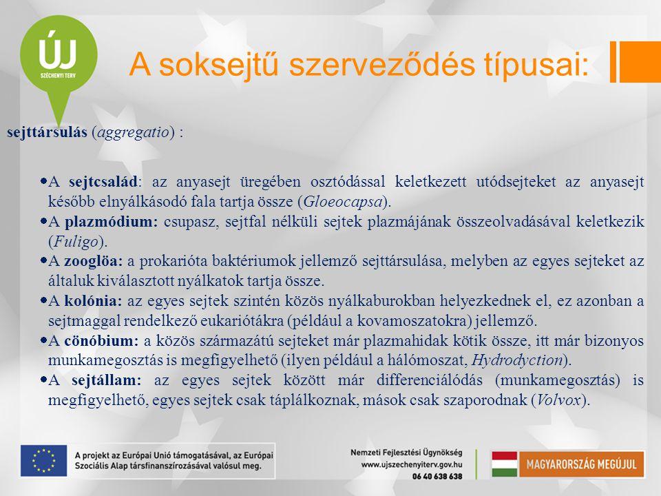 A soksejtű szerveződés típusai: