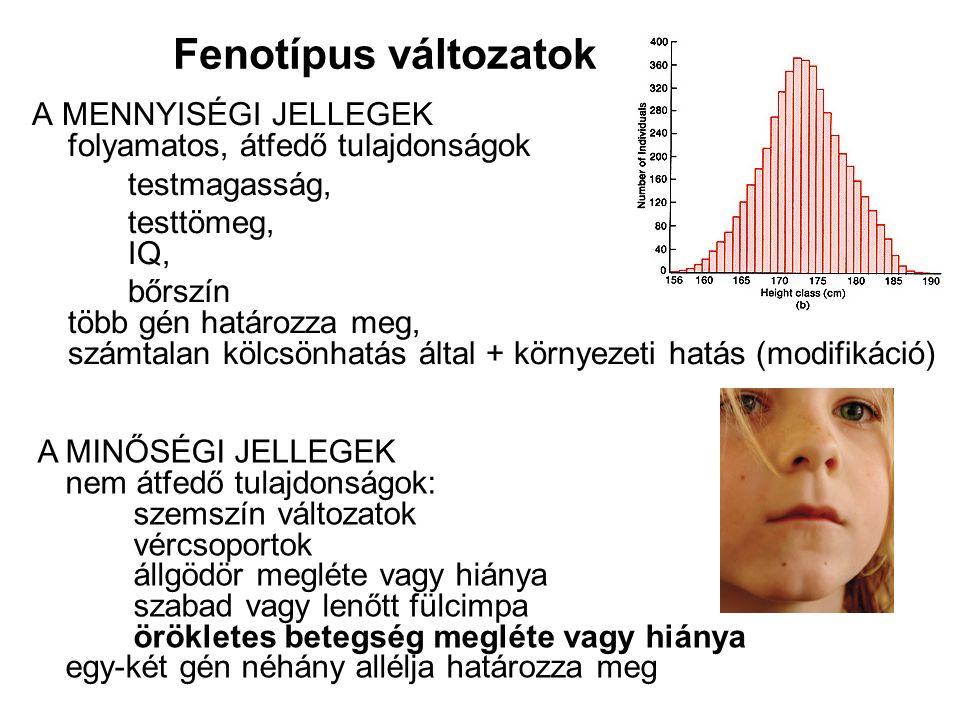 Fenotípus változatok A MENNYISÉGI JELLEGEK folyamatos, átfedő tulajdonságok. testmagasság, testtömeg, IQ,