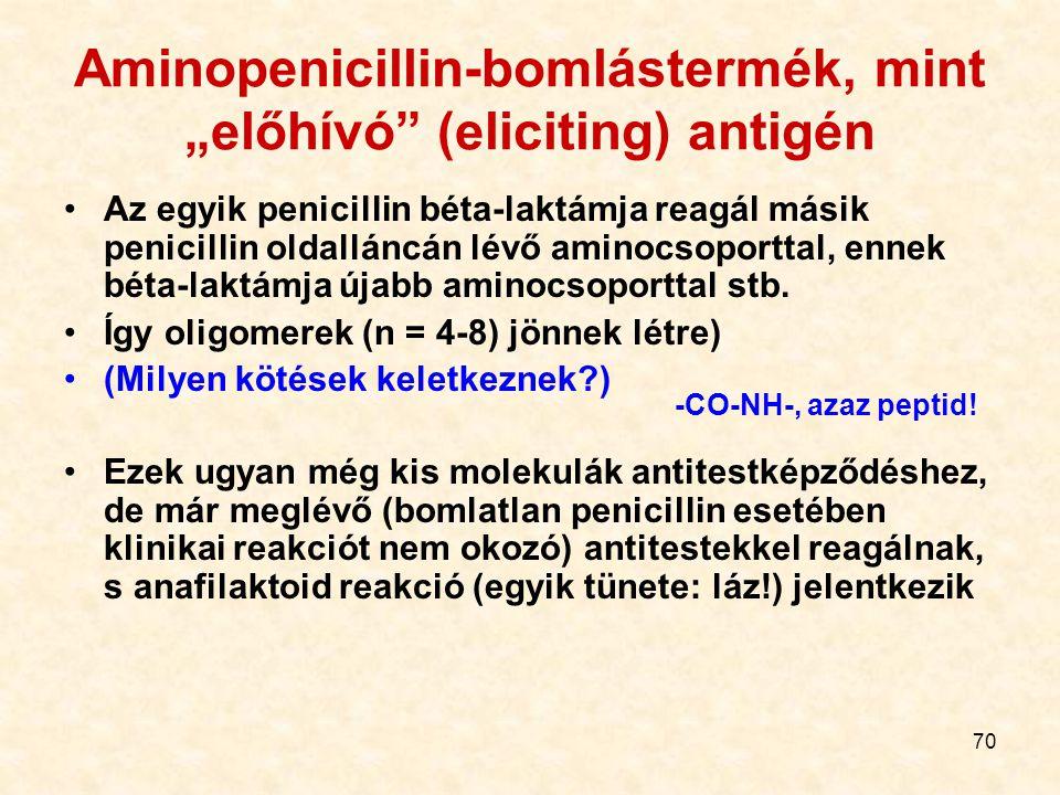 """Aminopenicillin-bomlástermék, mint """"előhívó (eliciting) antigén"""