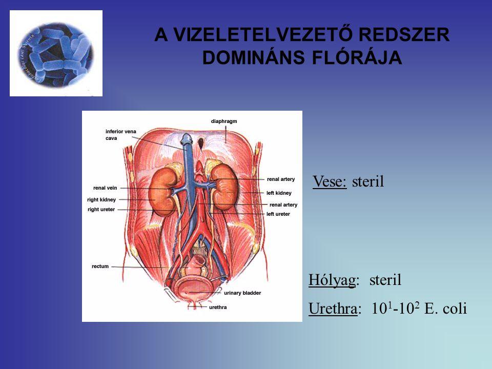 A VIZELETELVEZETŐ REDSZER DOMINÁNS FLÓRÁJA