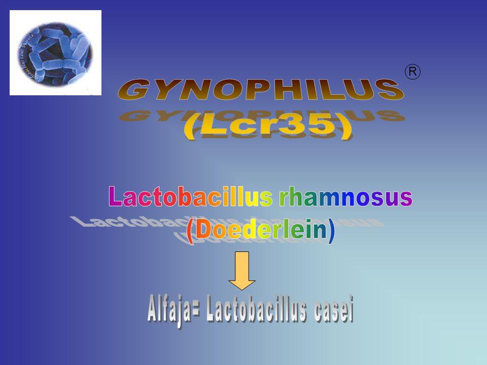 GYNOPHILUS (Lcr35) Lactobacillus rhamnosus (Doederlein)