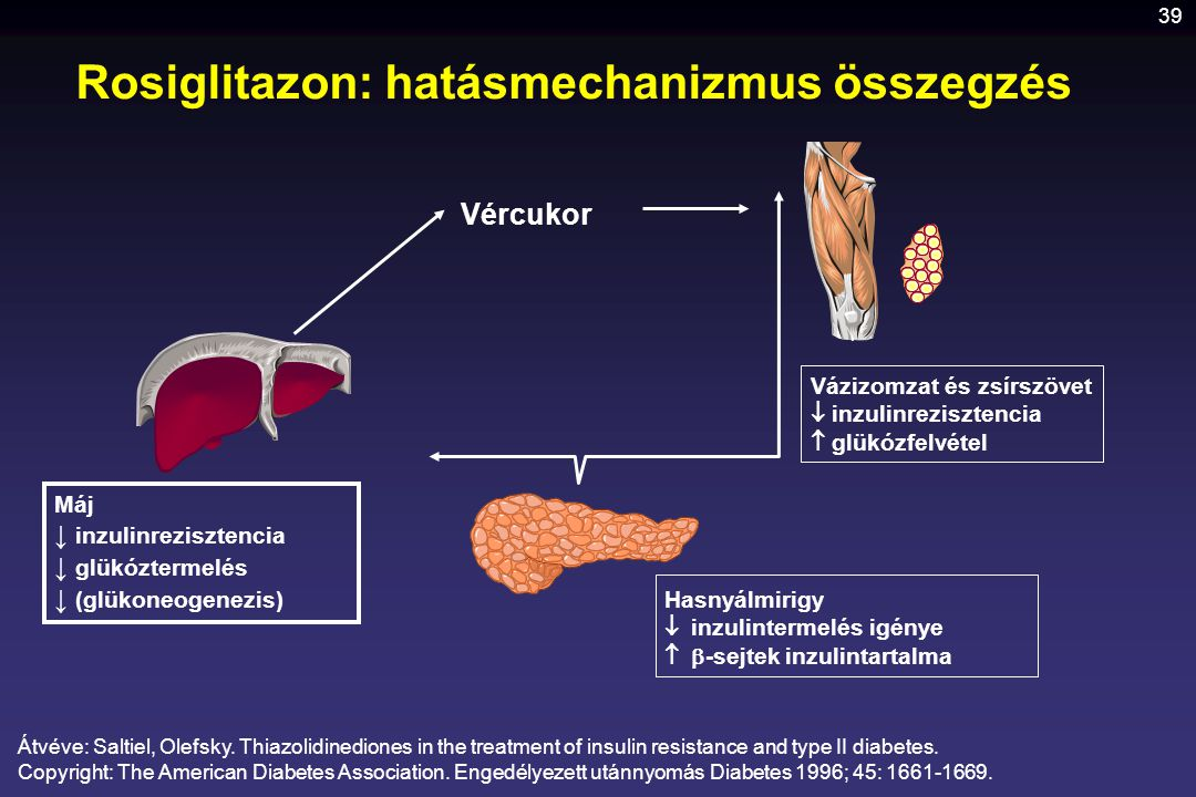 Rosiglitazon: hatásmechanizmus összegzés