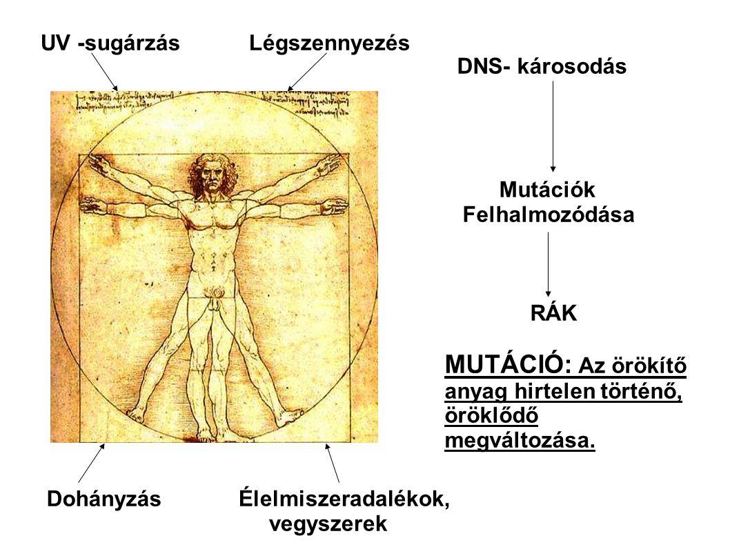 MUTÁCIÓ: Az örökítő anyag hirtelen történő, öröklődő megváltozása.