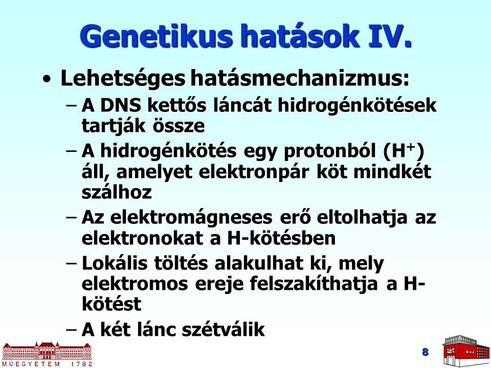 Genetikus hatások IV. Lehetséges hatásmechanizmus: