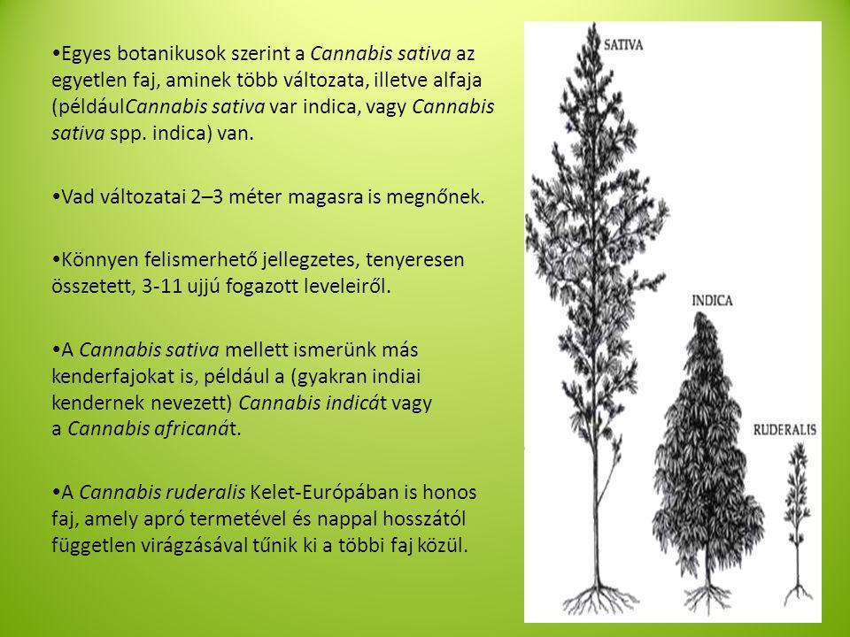 Egyes botanikusok szerint a Cannabis sativa az egyetlen faj, aminek több változata, illetve alfaja (példáulCannabis sativa var indica, vagy Cannabis sativa spp. indica) van.