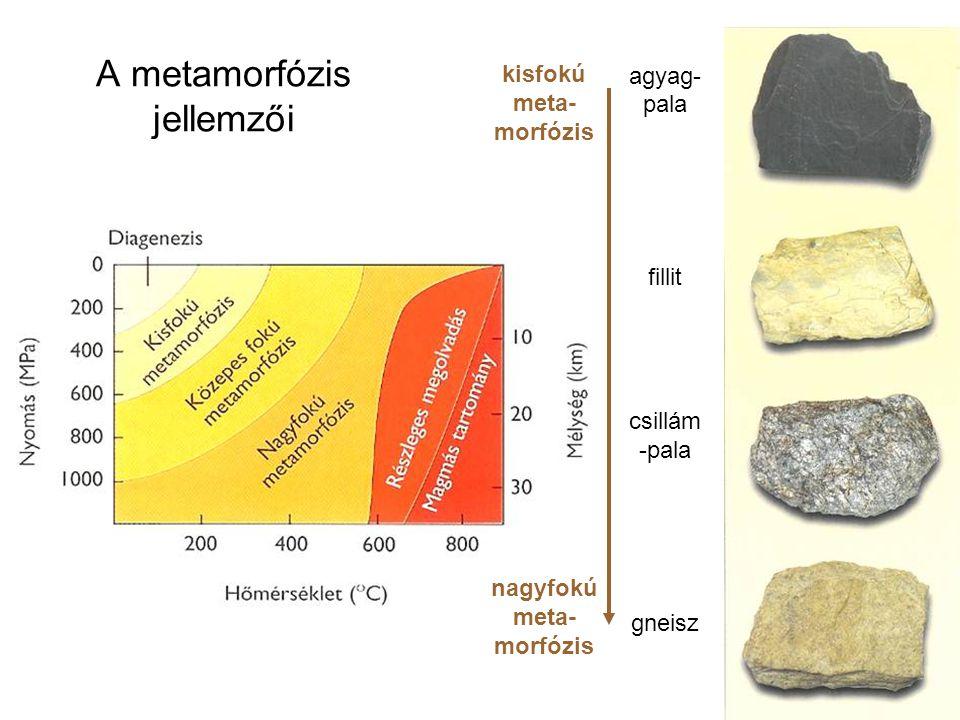 A metamorfózis jellemzői