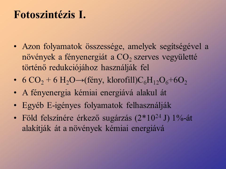 Fotoszintézis I.