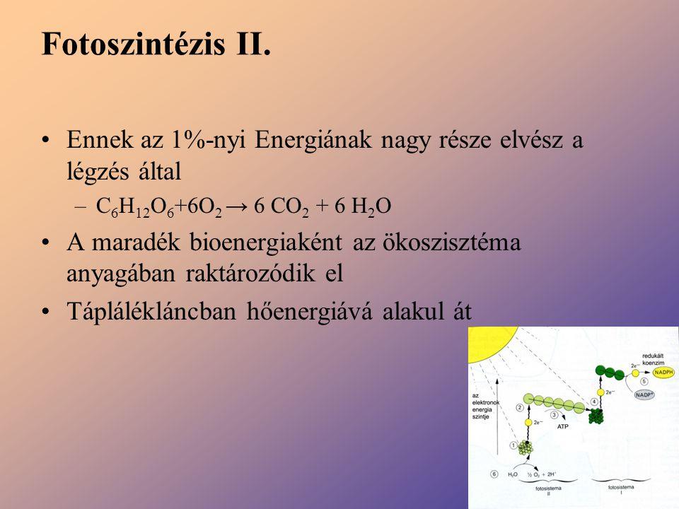 Fotoszintézis II. Ennek az 1%-nyi Energiának nagy része elvész a légzés által. C6H12O6+6O2 → 6 CO2 + 6 H2O.