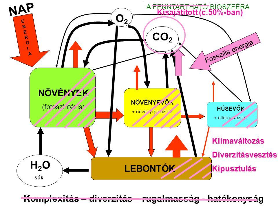NAP A FENNTARTHATÓ BIOSZFÉRA. Kisajátított (c.50%-ban) O2. ENERGIA. CO2. Fosszilis energia. NÖVÉNYEK.