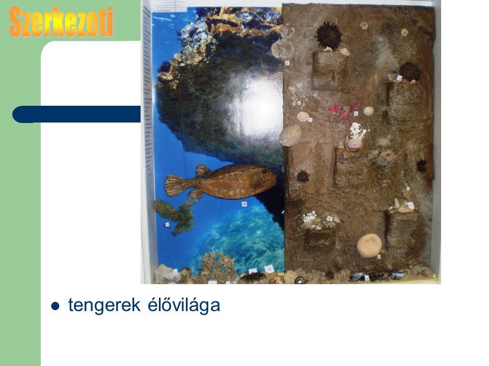 Szerkezeti tengerek élővilága