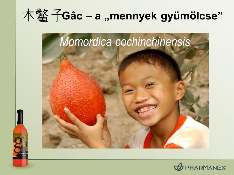 """Gâc – a """"mennyek gyümölcse"""