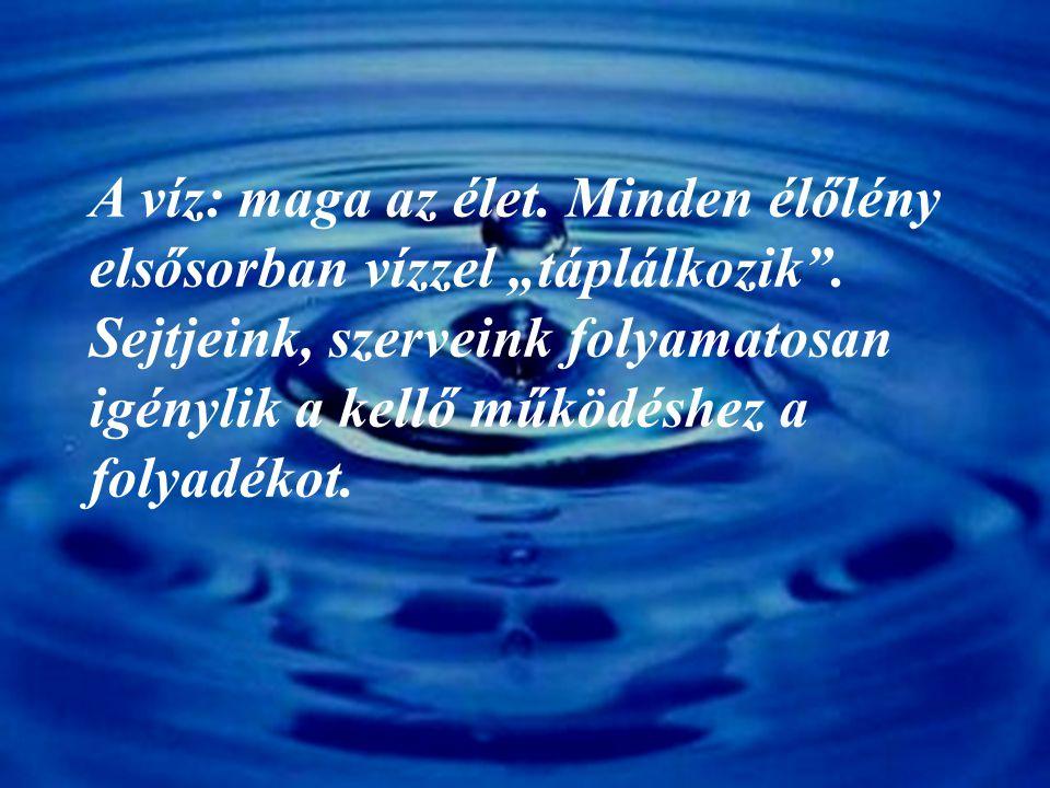 """A víz: maga az élet. Minden élőlény elsősorban vízzel """"táplálkozik"""