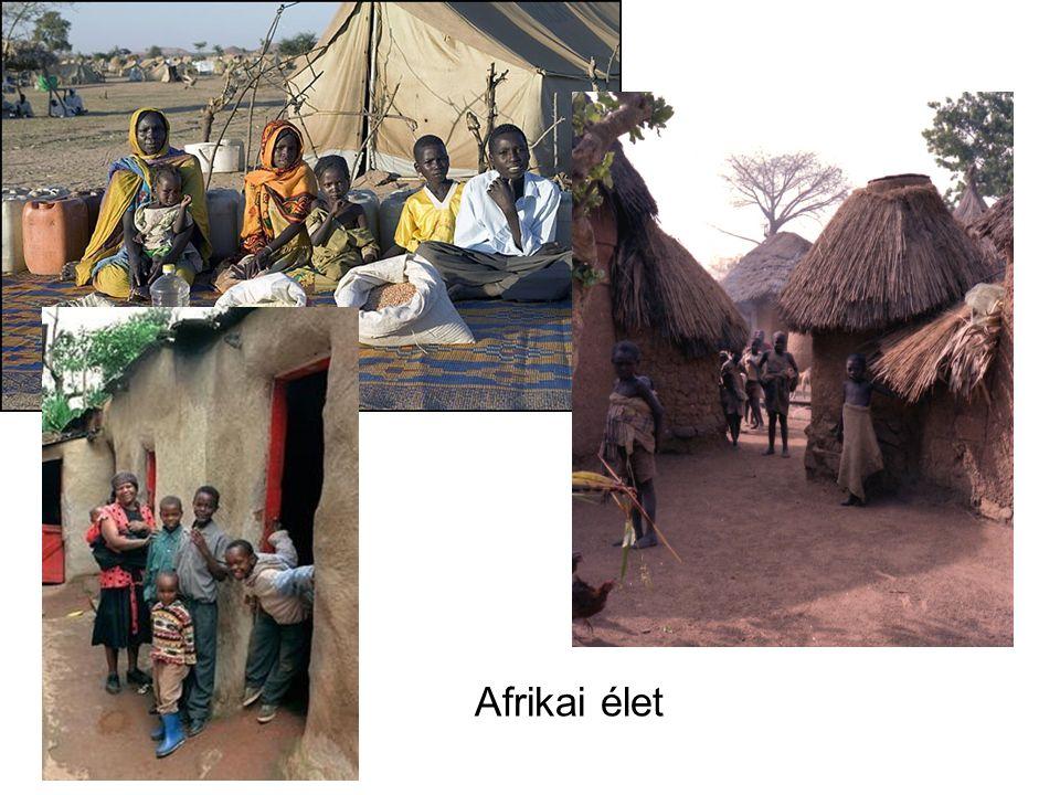 Afrikai élet