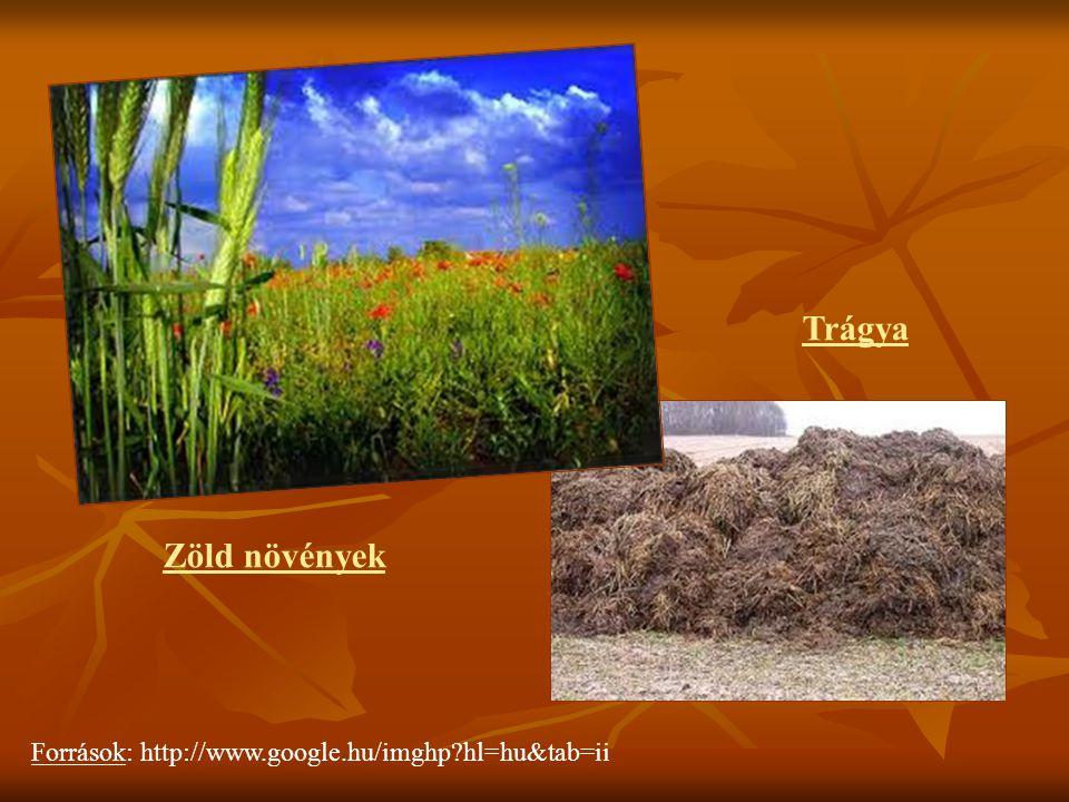 Trágya Zöld növények Források: http://www.google.hu/imghp hl=hu&tab=ii