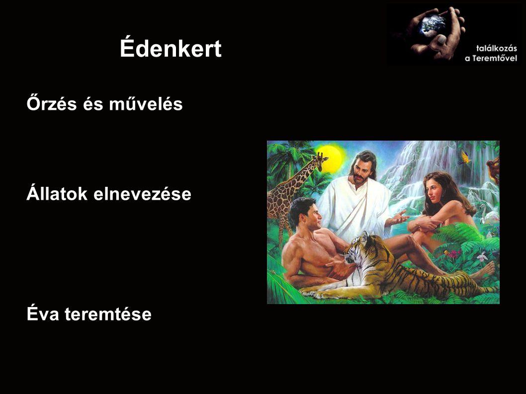 Édenkert Őrzés és művelés Állatok elnevezése Éva teremtése