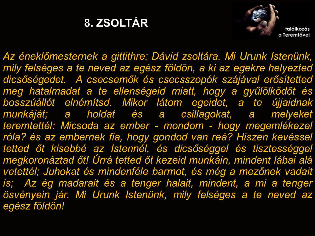 8. ZSOLTÁR