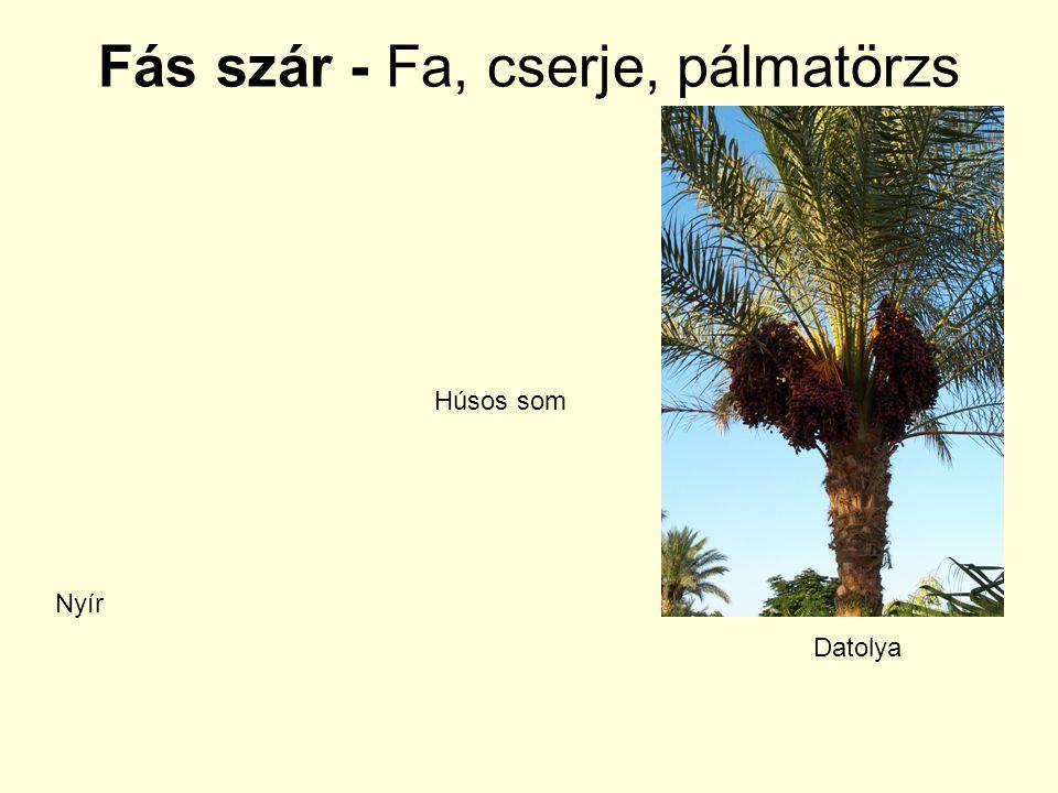Fás szár - Fa, cserje, pálmatörzs