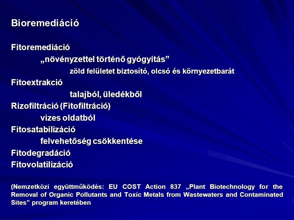 """Bioremediáció Fitoremediáció """"növényzettel történő gyógyítás"""