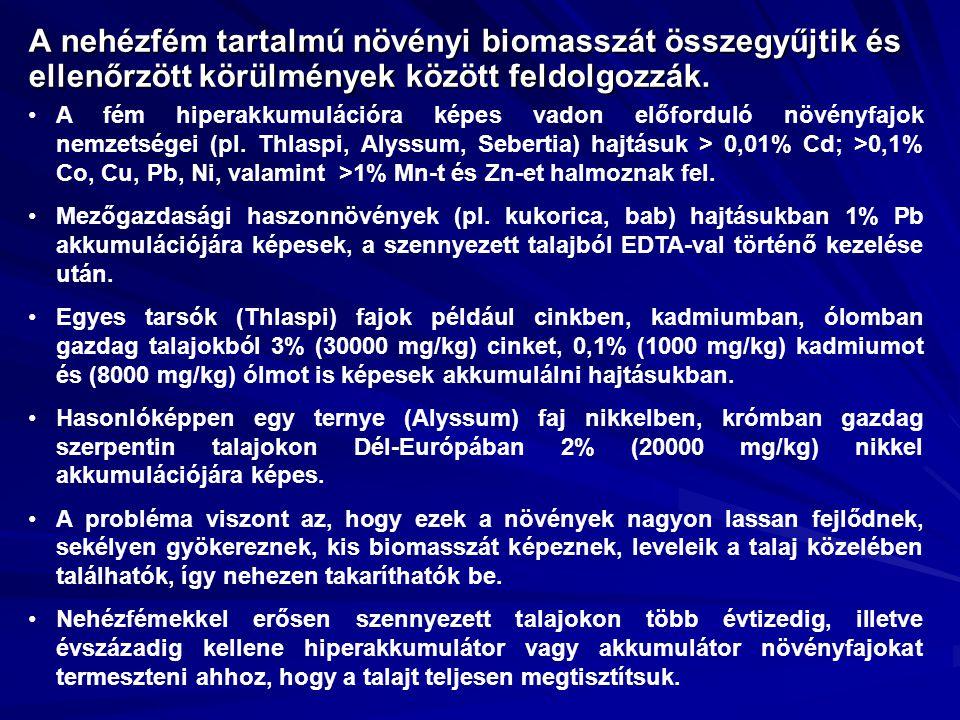 A nehézfém tartalmú növényi biomasszát összegyűjtik és ellenőrzött körülmények között feldolgozzák.
