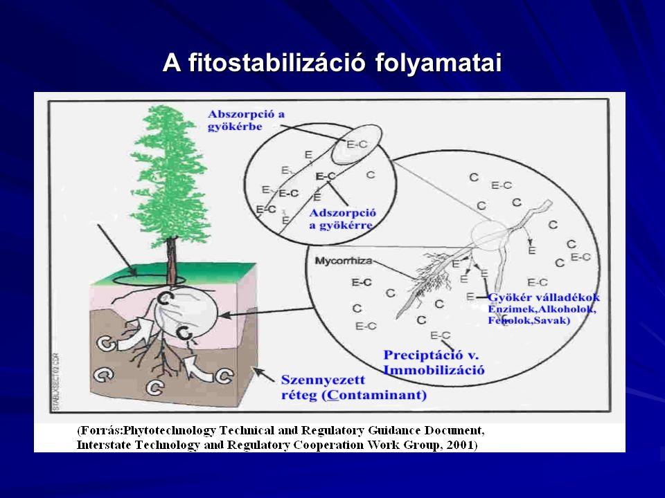 A fitostabilizáció folyamatai