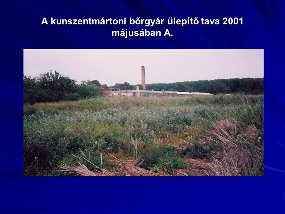 A kunszentmártoni bőrgyár ülepítő tava 2001 májusában A.