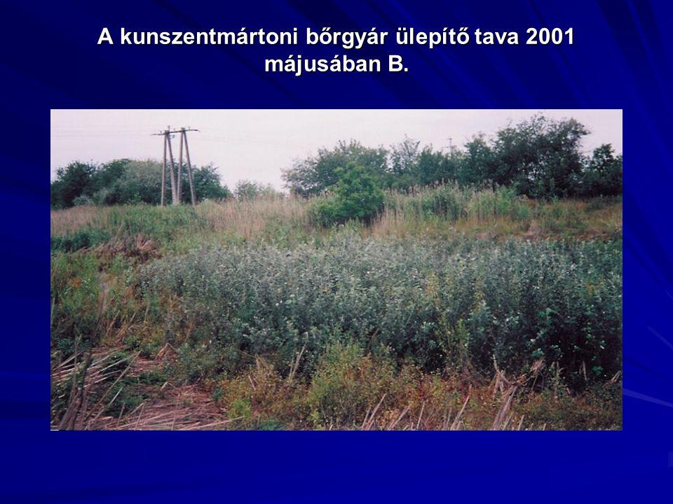 A kunszentmártoni bőrgyár ülepítő tava 2001 májusában B.