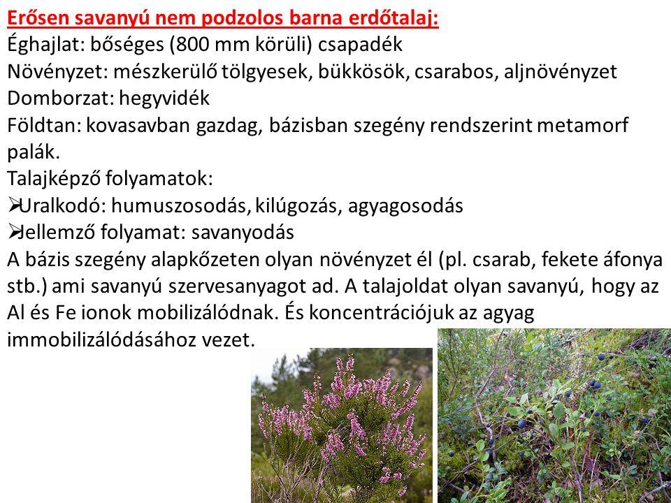 Erősen savanyú nem podzolos barna erdőtalaj: