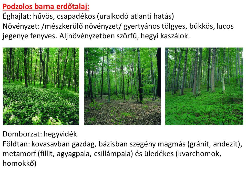 Podzolos barna erdőtalaj: