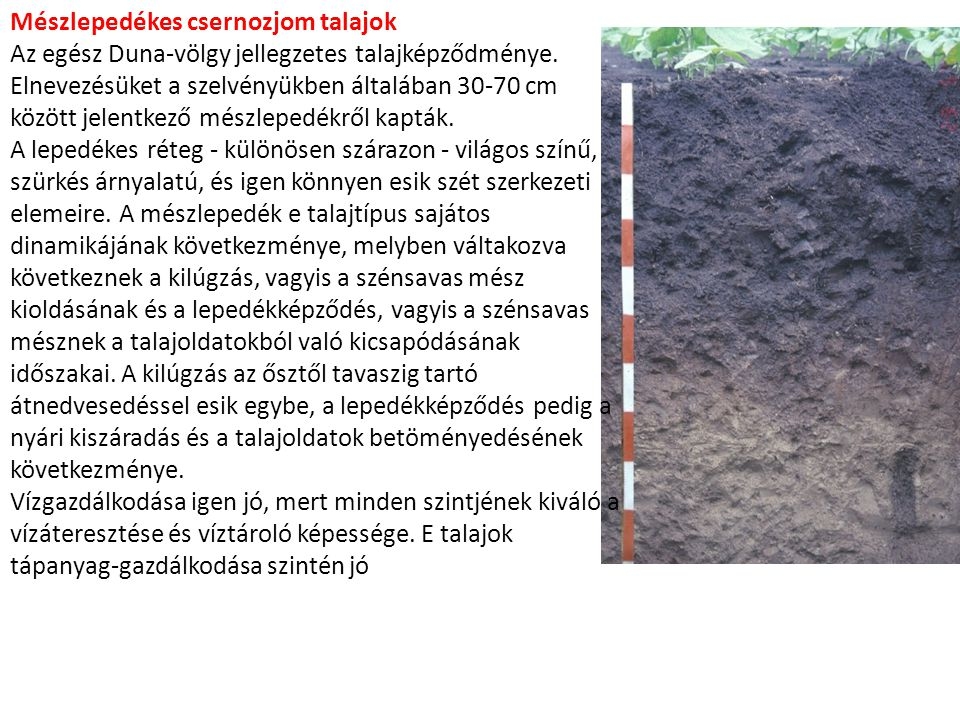 Mészlepedékes csernozjom talajok
